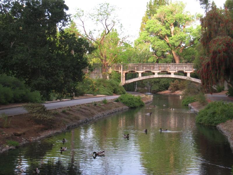 UC_Davis_arboretum_-_ducks